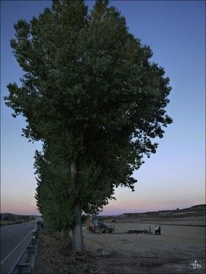 Cobertelada (Soria)